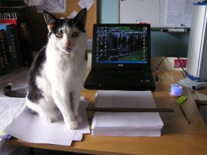 Cat sitting on the manuscript