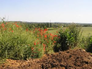 View across sunlit valley with poppies in foreground