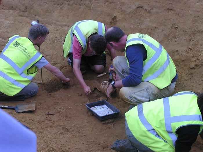 Excavating a skull