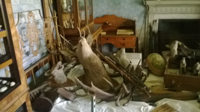 Iron frame bed barely visible under junk including stuffed stag heads and antlers