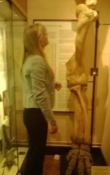 Elephant leg bones at Eton Nat Hist museum