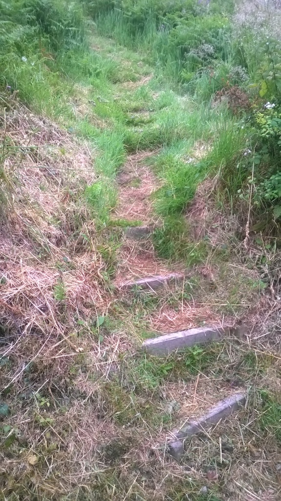 Wooden steps down overgrown slope