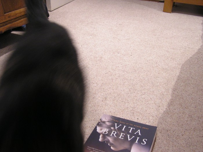 Blurred shot of cat's departing back: half book visible