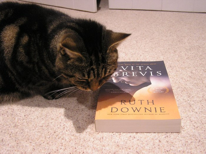 Cat dozing over book