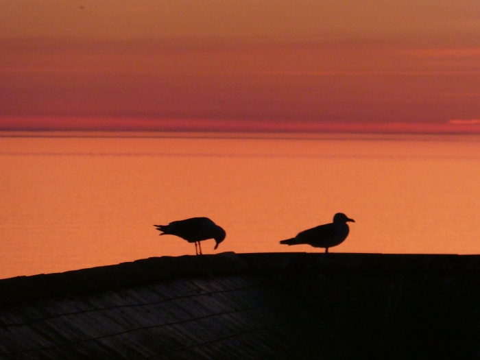 Seagulls silhouetted against sunset